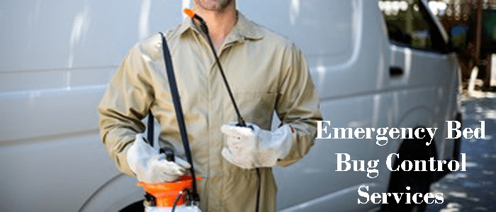Emergency Bed-bug Control Service