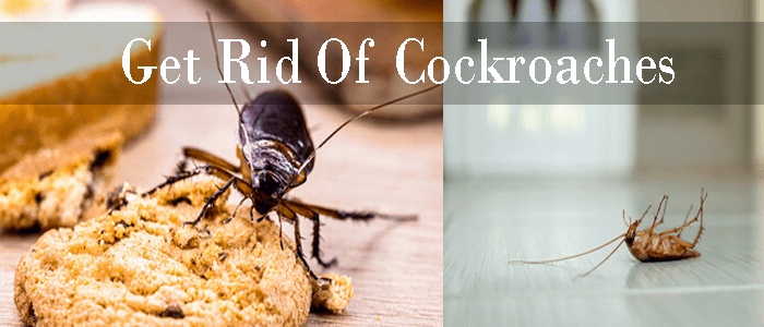 Same Day Cockroach Control Services